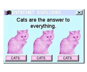 cat, grunge, and pastel image