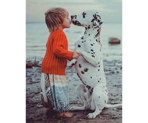love, dog, and dalmatian image
