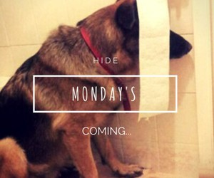 funny, monday, and true story image