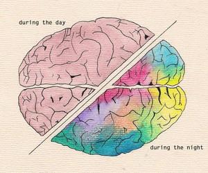brain, night, and day image