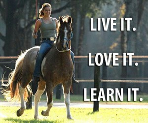 horse, freedom, and love it image