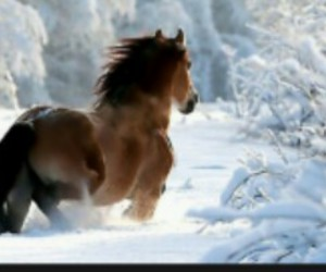 snow, horse, and nature image