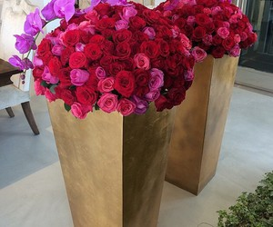 flowers, pink rose, and roses image