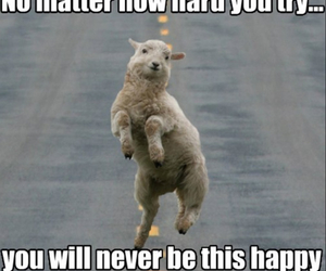 funny animals, happy, and hard image