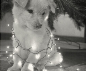 b&w, december, and dog image