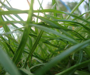 grass, nature, and photo image