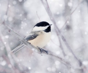 bird, snow, and white image