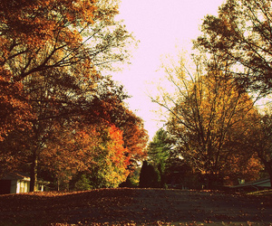 cold, colors, and fall image