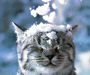 cat, snow, and sweet image