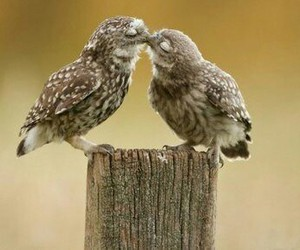 cute, love, and bird image