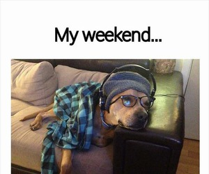 dog, weekend, and funny image