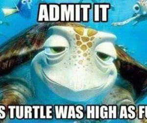 turtle, high, and funny image