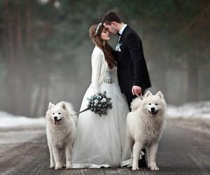 dog, wedding, and marriage image