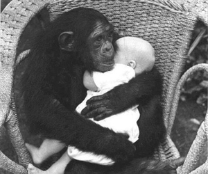 baby, monkey, and animal image