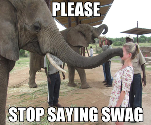 swag, elephant, and funny image