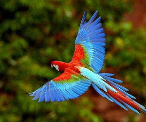animal, parrot, and blue image