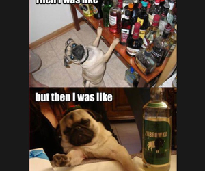 alcohol, dogs, and funny animals image