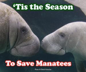 manatee and save the manatee image