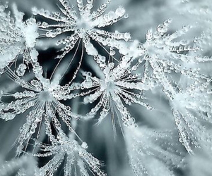 winter, ice, and snow image