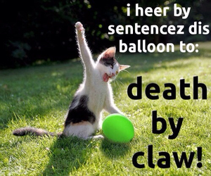cat and balloons image