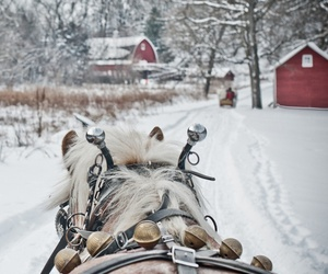 snow, horse, and winter image