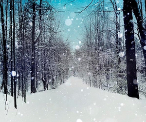 holidays, photography, and winter image