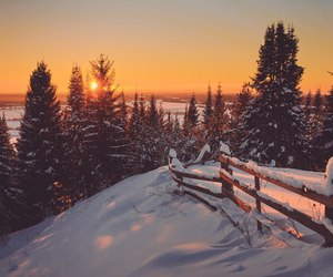 forest, landscapes, and snow image