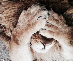 adorable, funny, and lion image