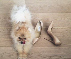dog, shoes, and puppy image