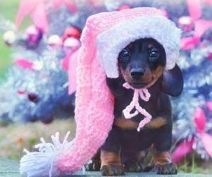 christmas, dog, and pink image