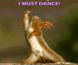 dance, friday, and squirrel image