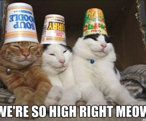 adorable, cats, and funny animals image