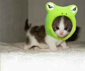 animals, cat, and frog image