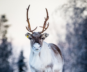 animal, nature, and winter image