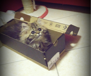beautiful, box, and cat image