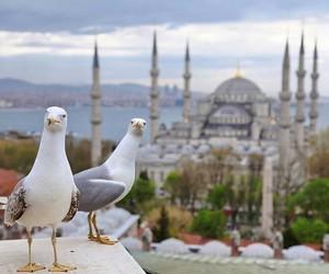 islam, Turkish, and istanbul image