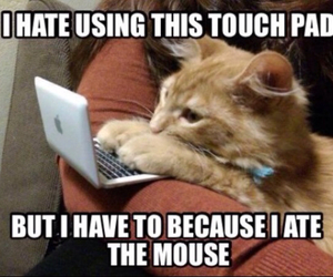 funny and mouse image