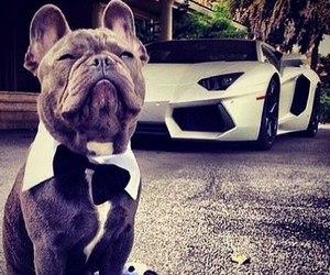dog, car, and Lamborghini image