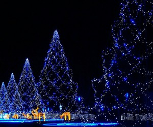 christmas tree, cold, and magic of winter image