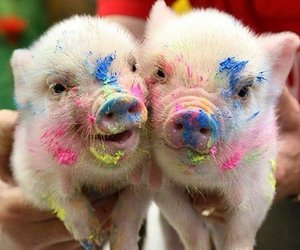 adorable, paint, and piggie image