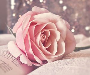 book, flower, and inspiration image