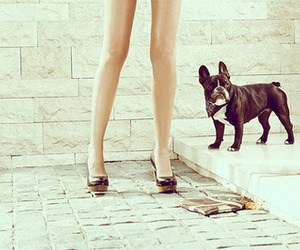 dog, legs, and shoes image