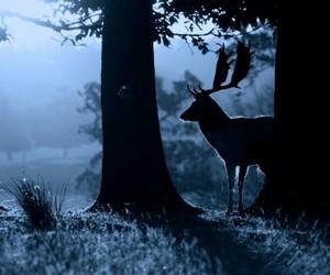 beautiful, deer, and night image