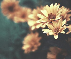 filter, flower, and yellow image