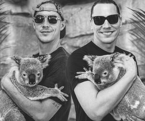 diplo, koalas, and tiesto image