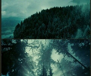 forest, forks, and twilight image