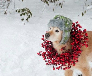christmas ready dog cute image