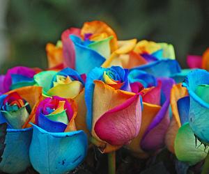 rose, flowers, and rainbow image