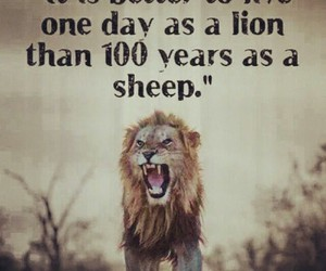 animals, courage, and motivation image