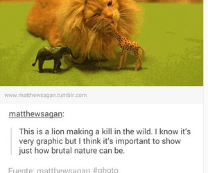 lion, cat, and funny image